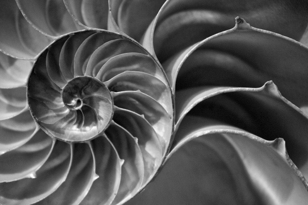 boston harvard natural history museum nautilus shell 2