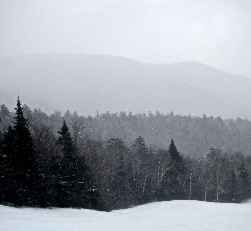 stowe summit trees snow