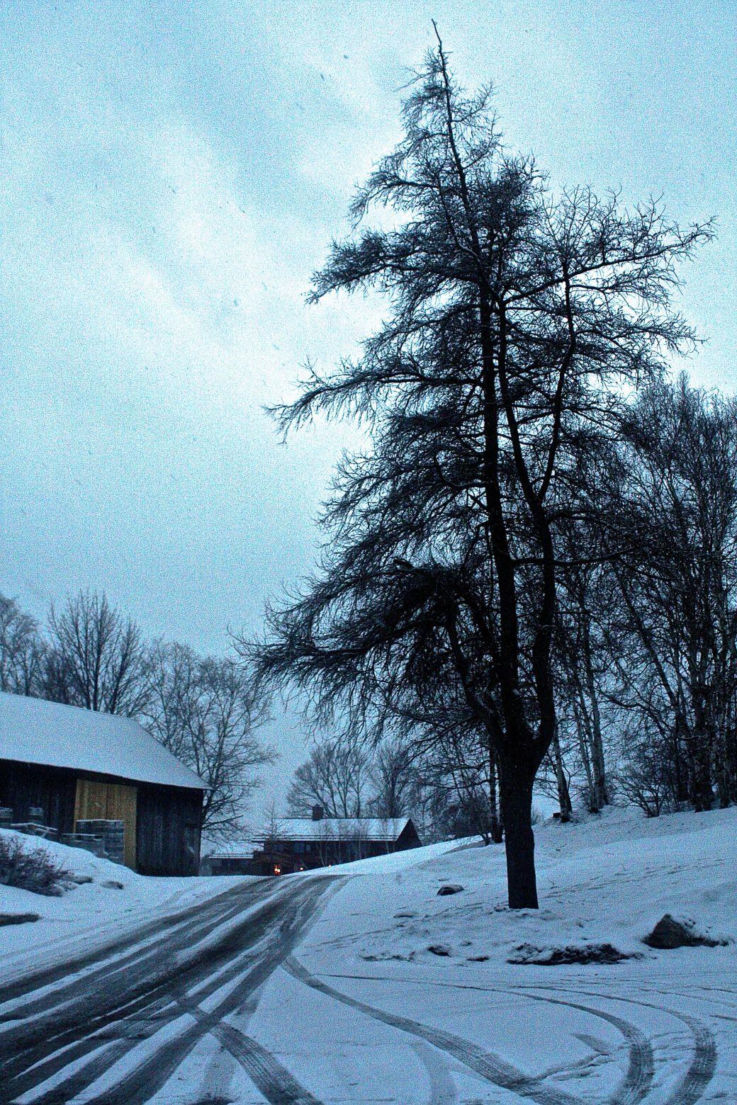 stowe trapp lodge trees