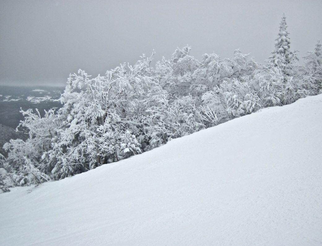sugarbush heaven's gate hill tress