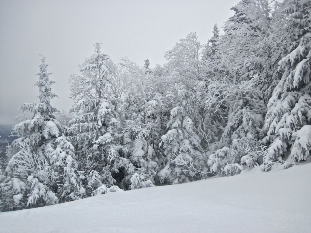 sugarbush heavens gate snow trees 2