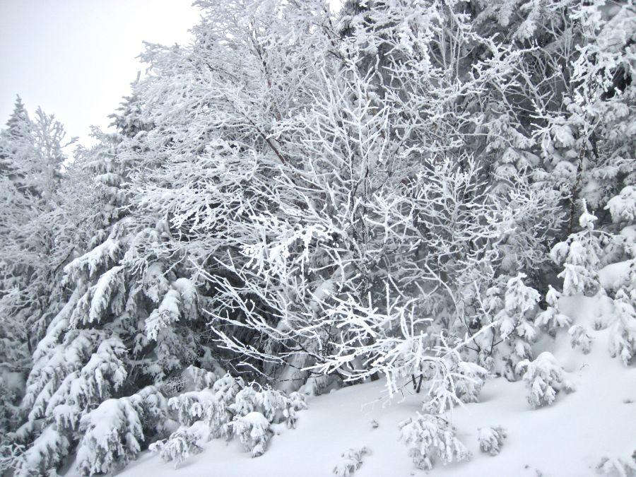 sugarbush heavens gate white trees