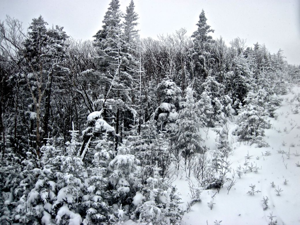 sugarbush mount ellen lift snow trees