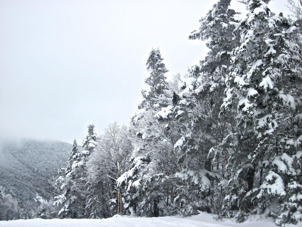 sugarbush white trees heavens gate 2