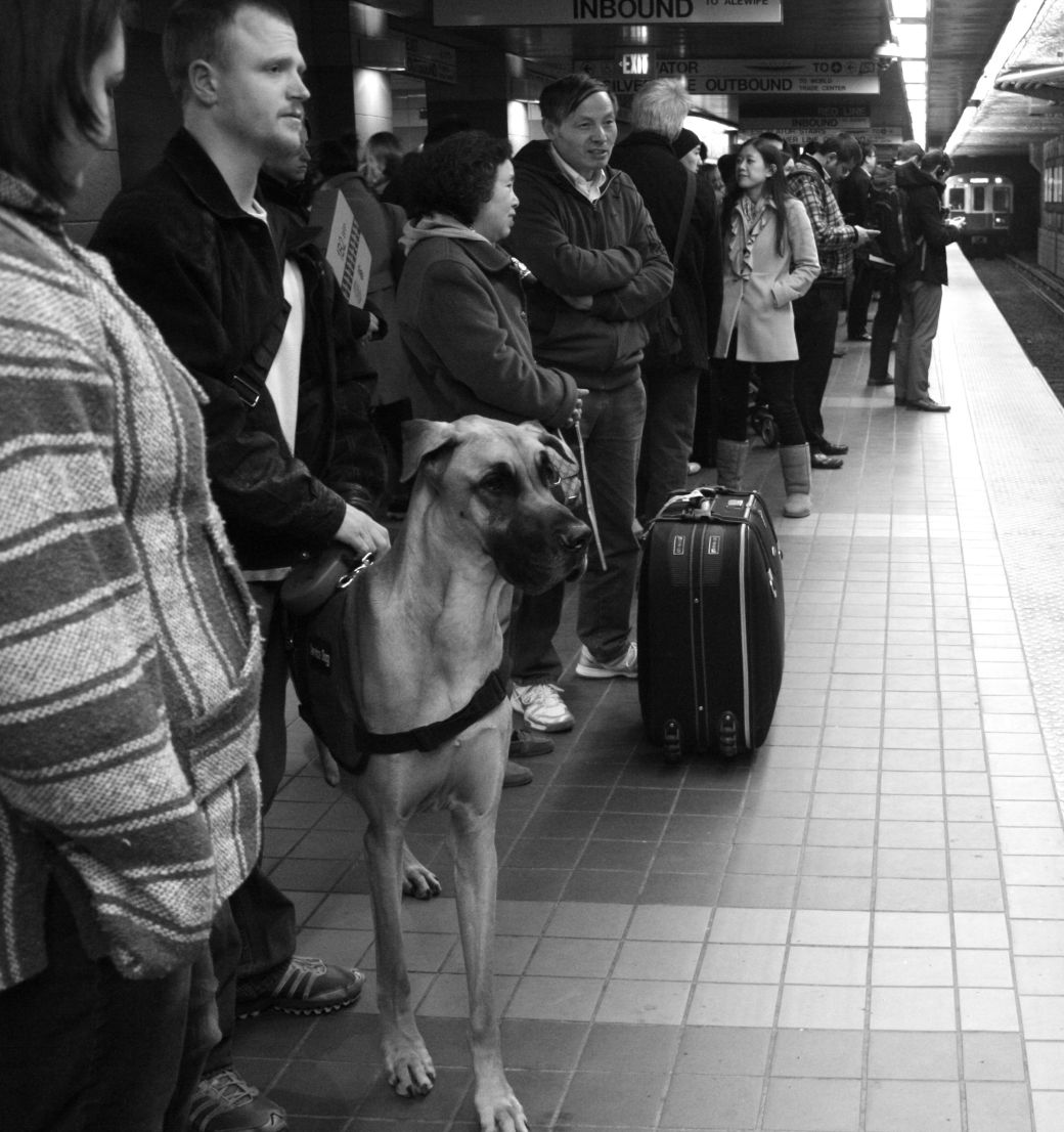boston red line south station great dane 2