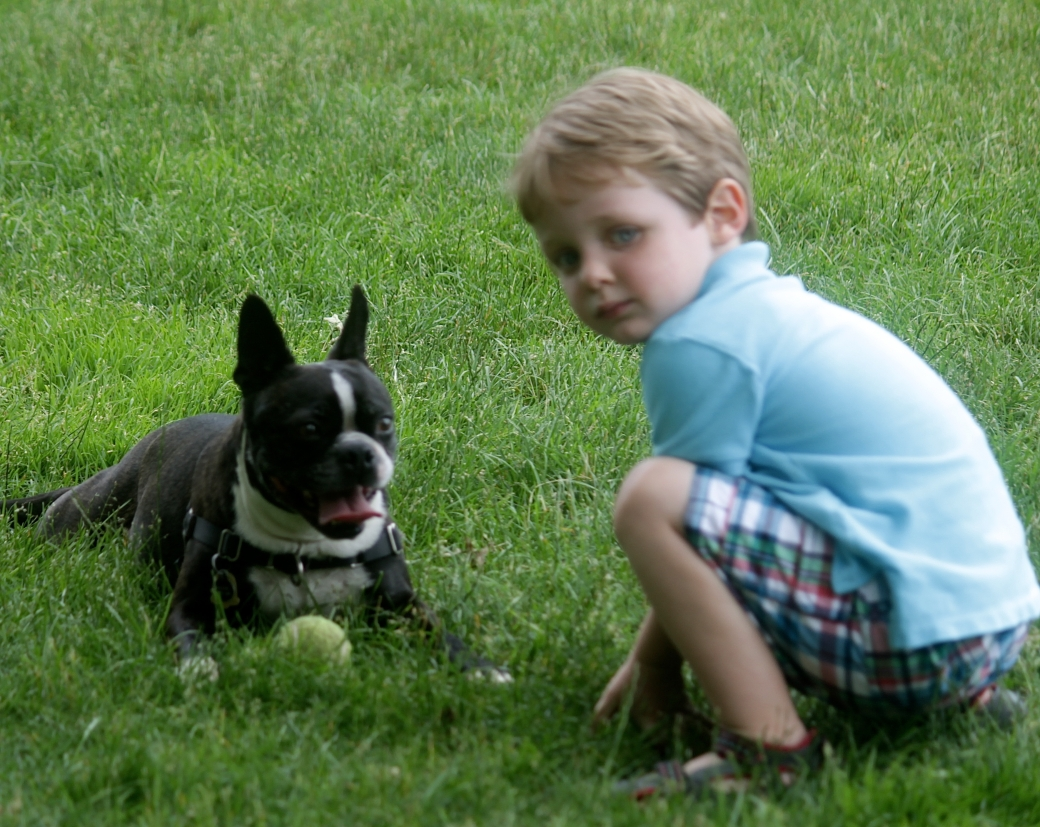 boston water front boston terrier boy ball 2