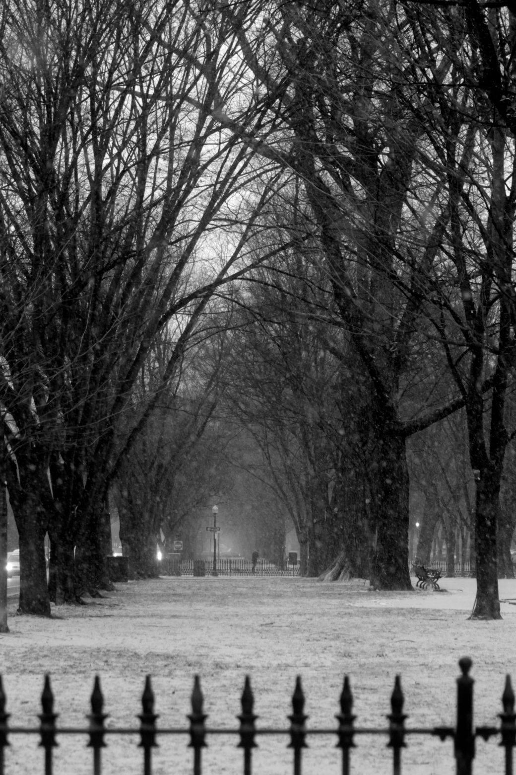 boston commonwealth avenue snow december 14 3
