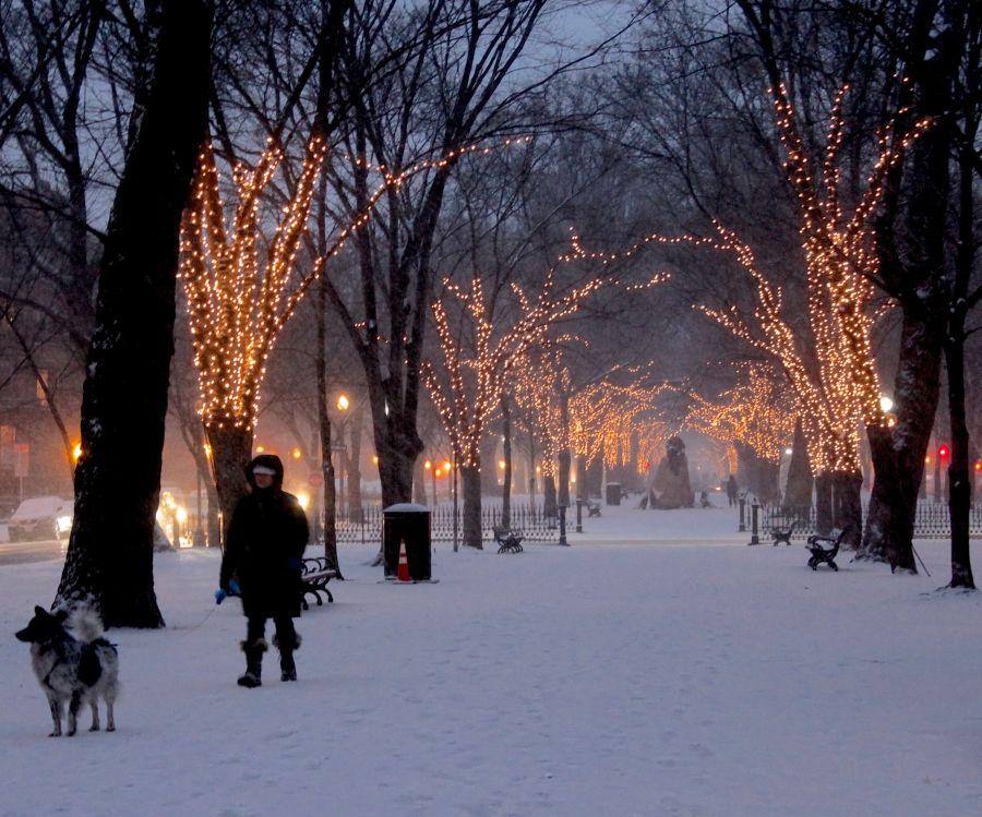boston commonwealth avenue snow december 14 7
