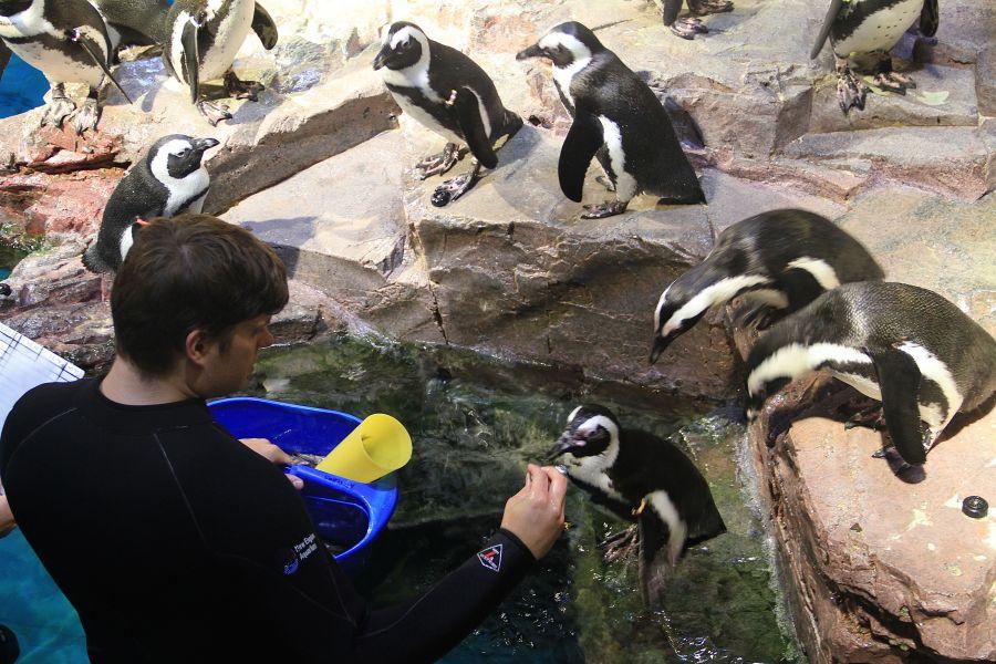 boston new england aquarium penguins 2