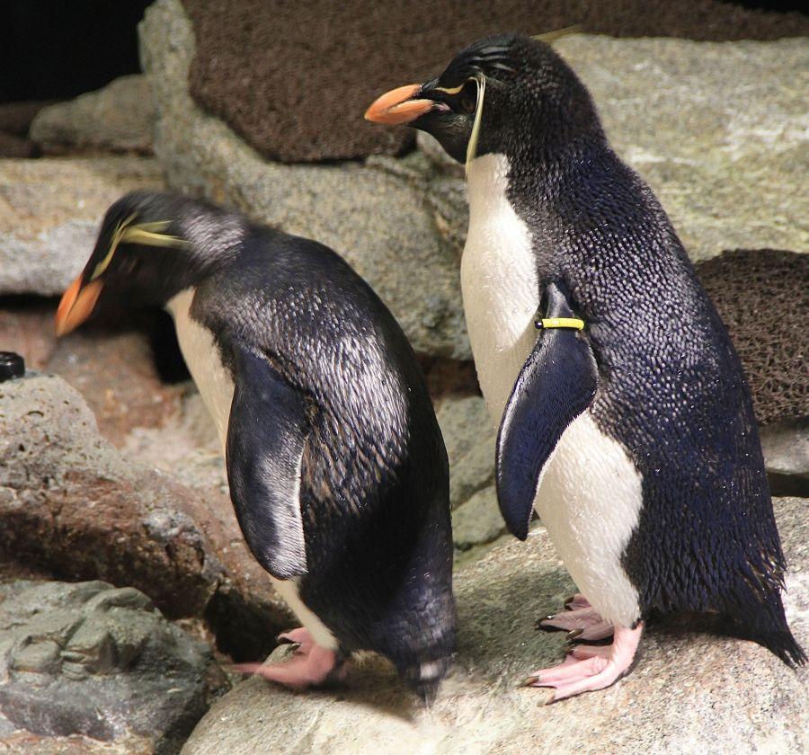boston new england aquarium penguins 3