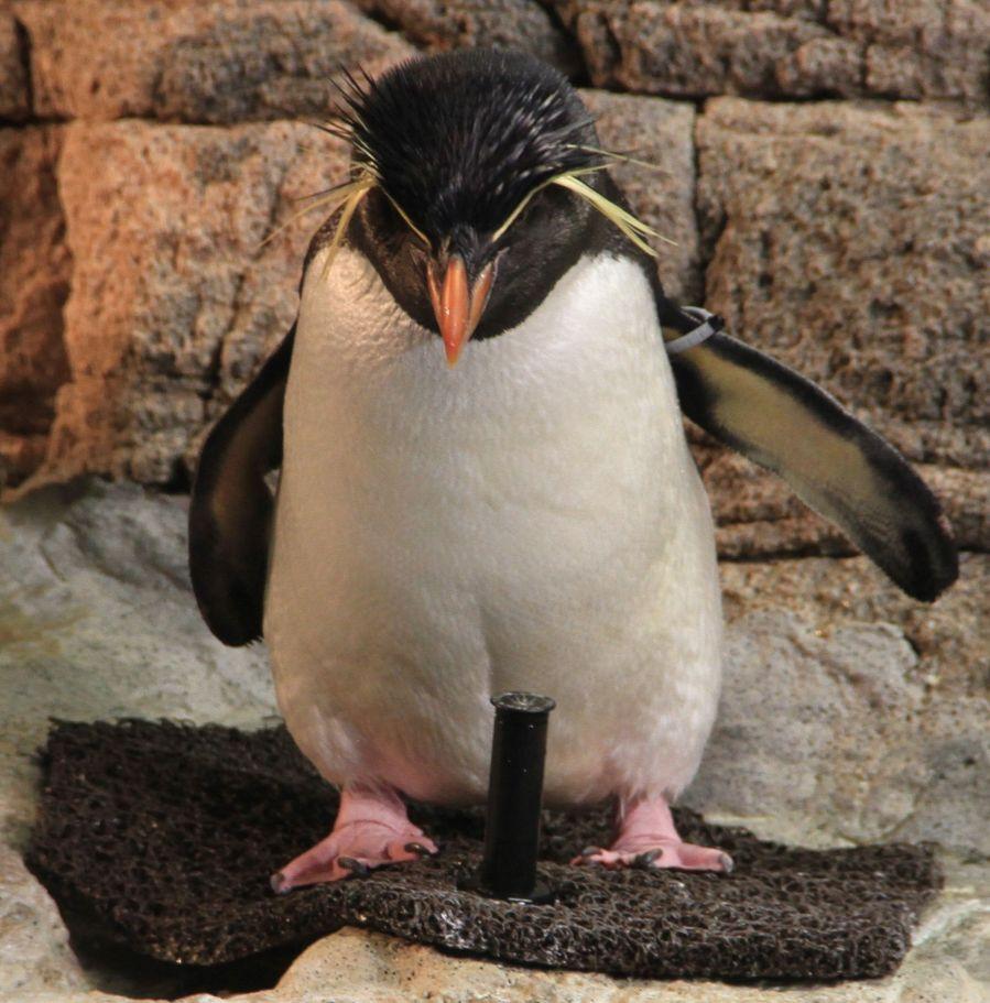 boston new england aquarium penguins 4
