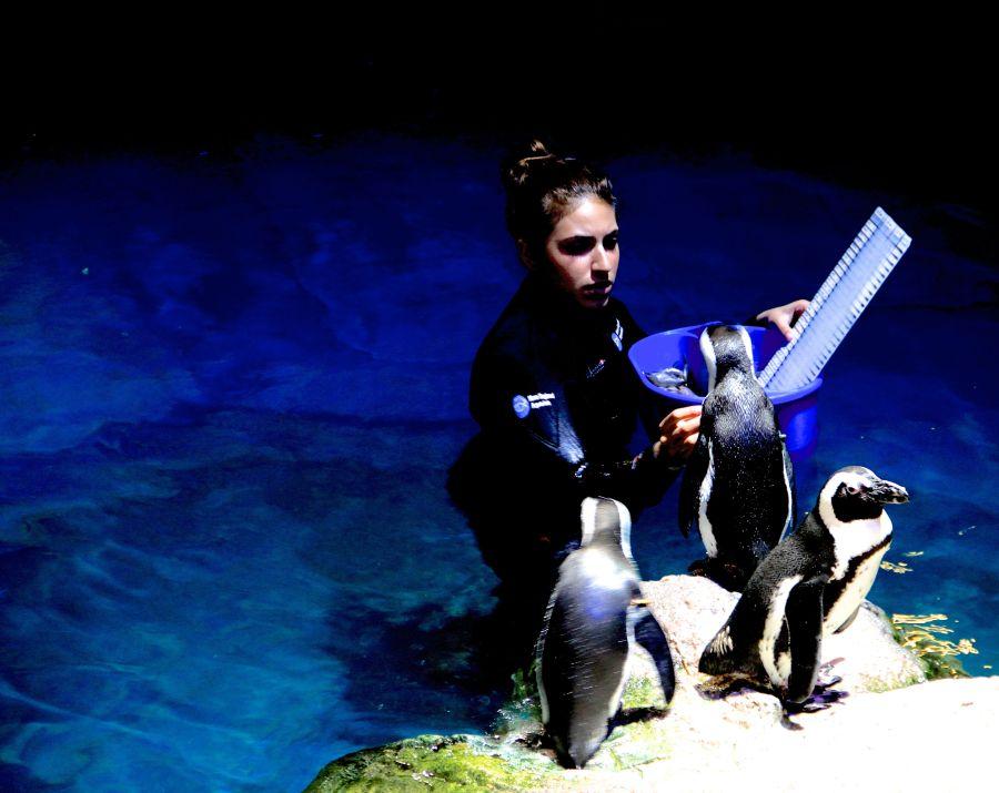boston new england aquarium penguins 5