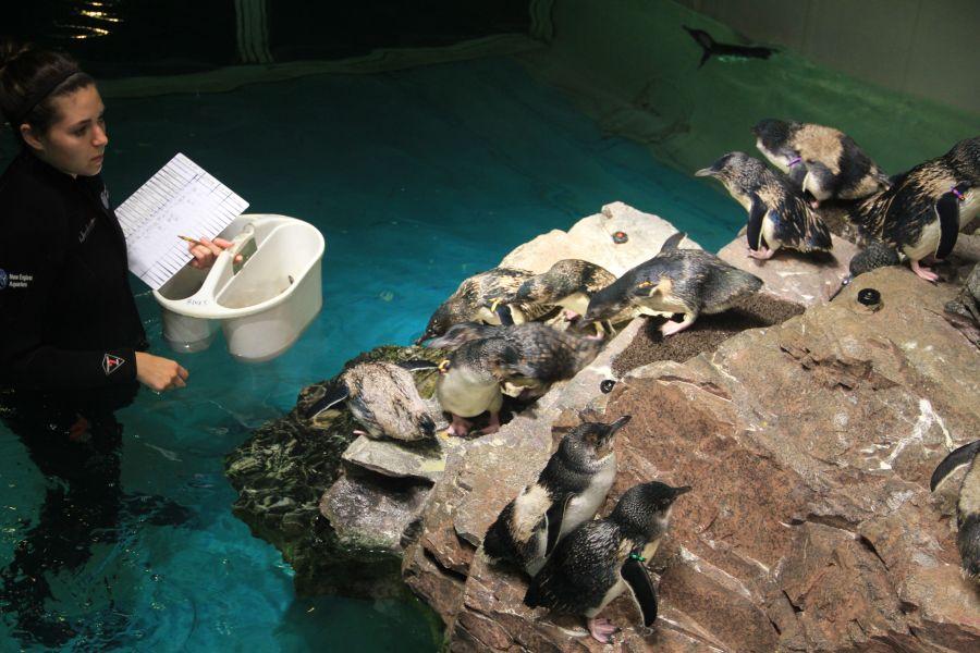 boston new england aquarium penguins 6