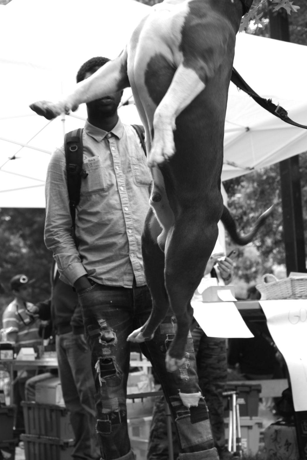 boston hemp fest 2014 dog jumping 3