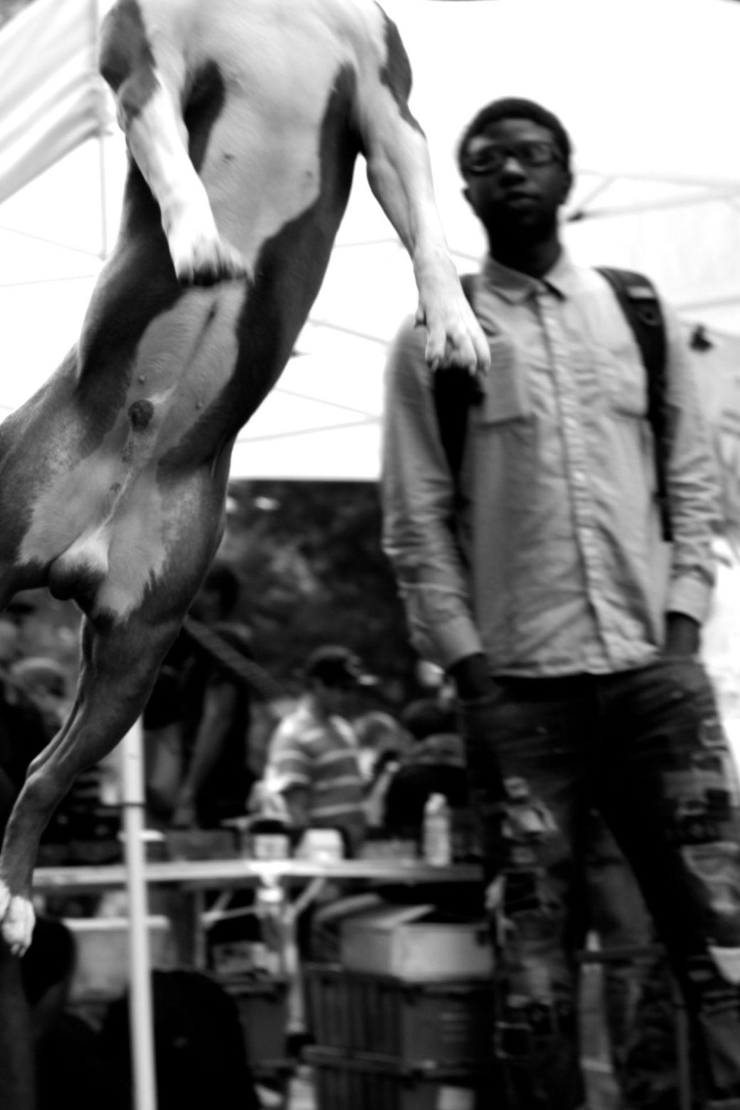 boston hemp fest 2014 dog jumping 4