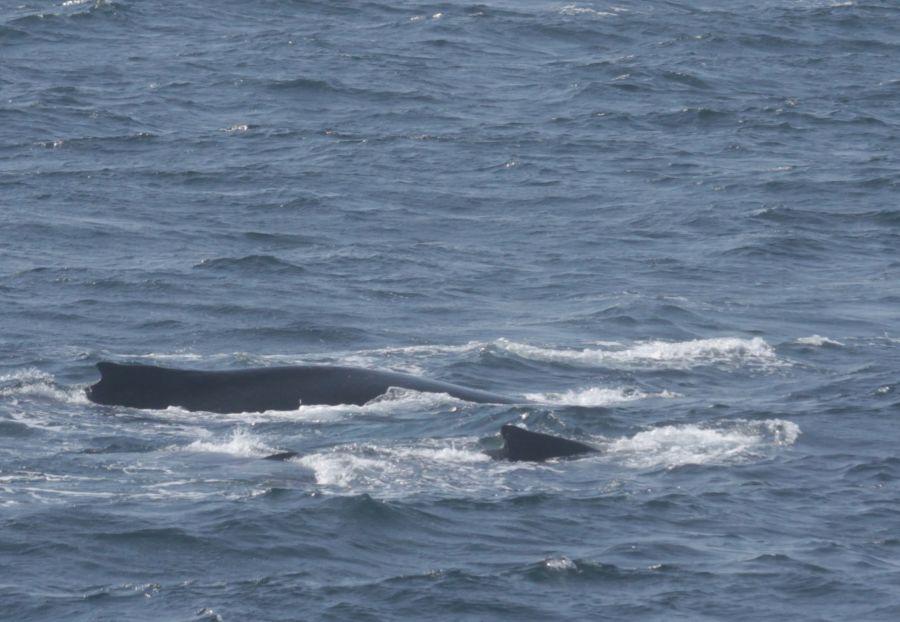 boston whale watch whales 2
