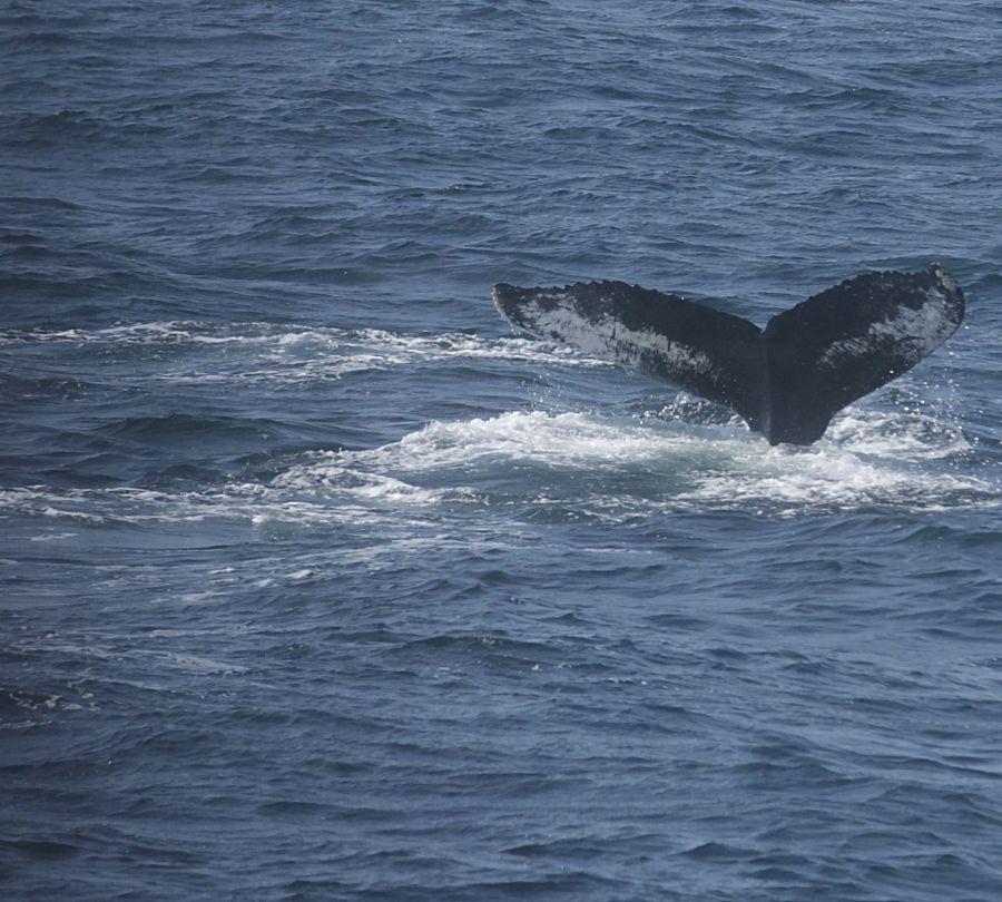 boston whale watch whales 3
