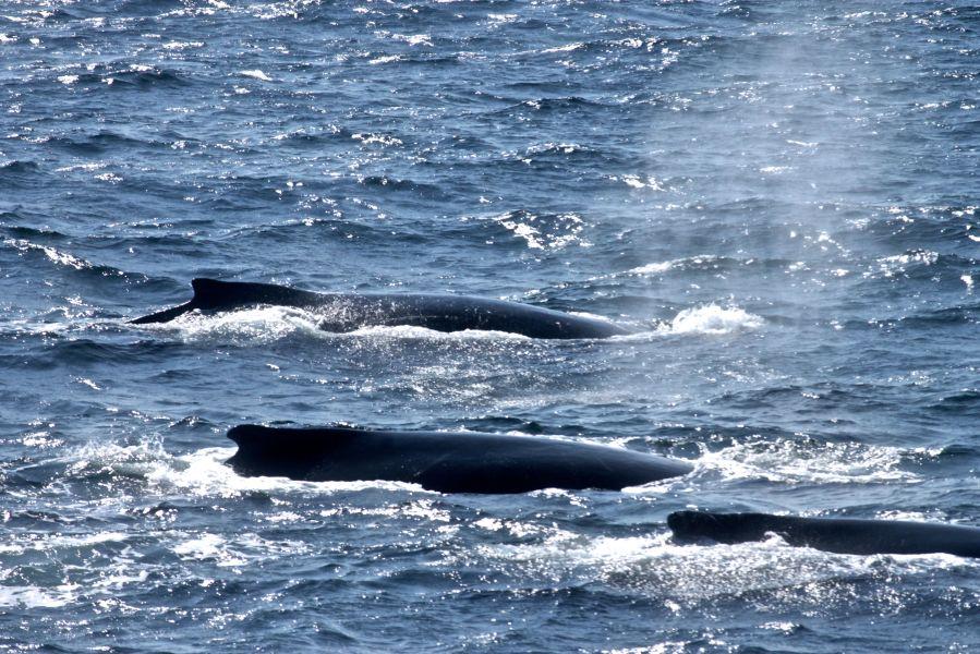 boston whale watch whales 8