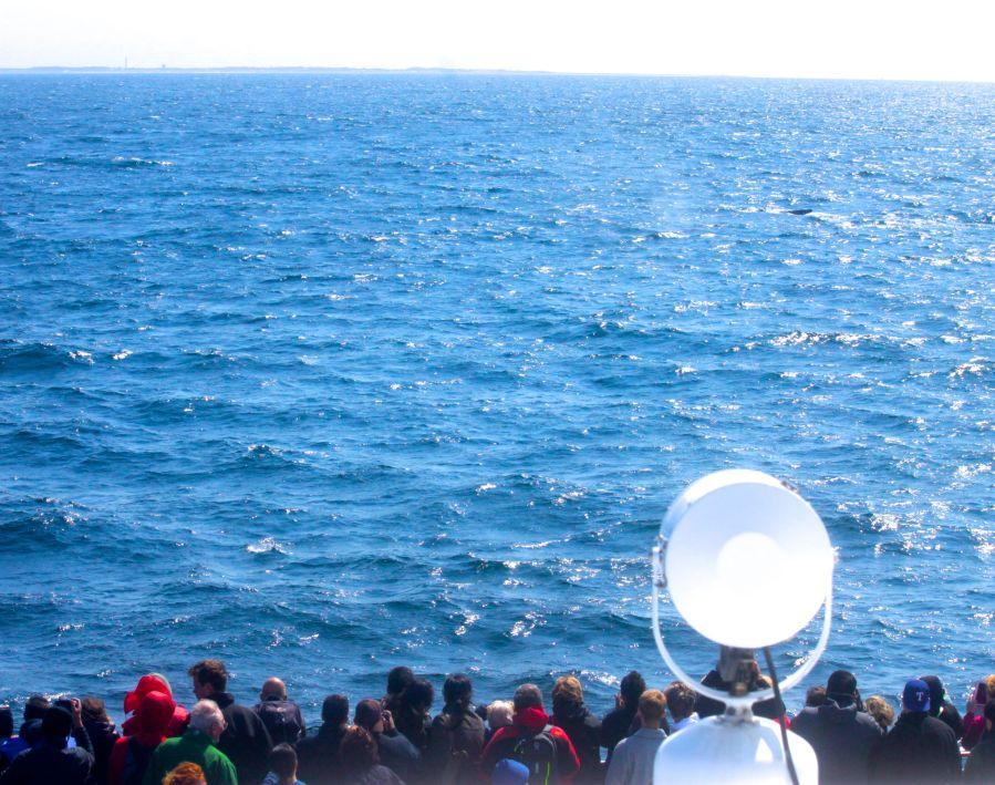 boston whale watching ship view