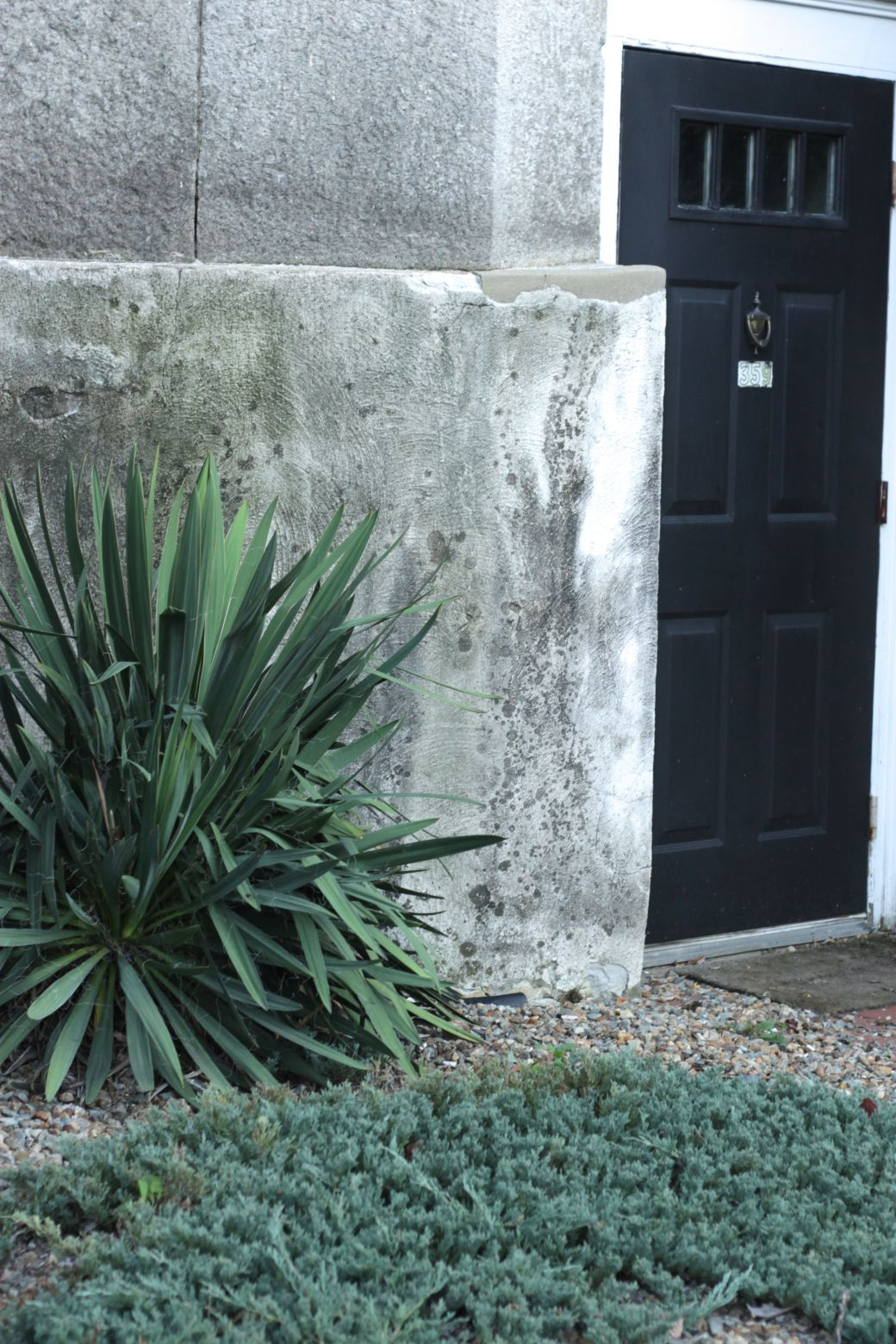 rhode island providence black door plants