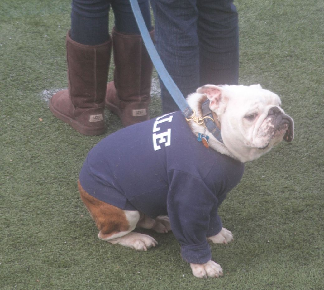 arvard yale football game november 22 2014 handsome dan