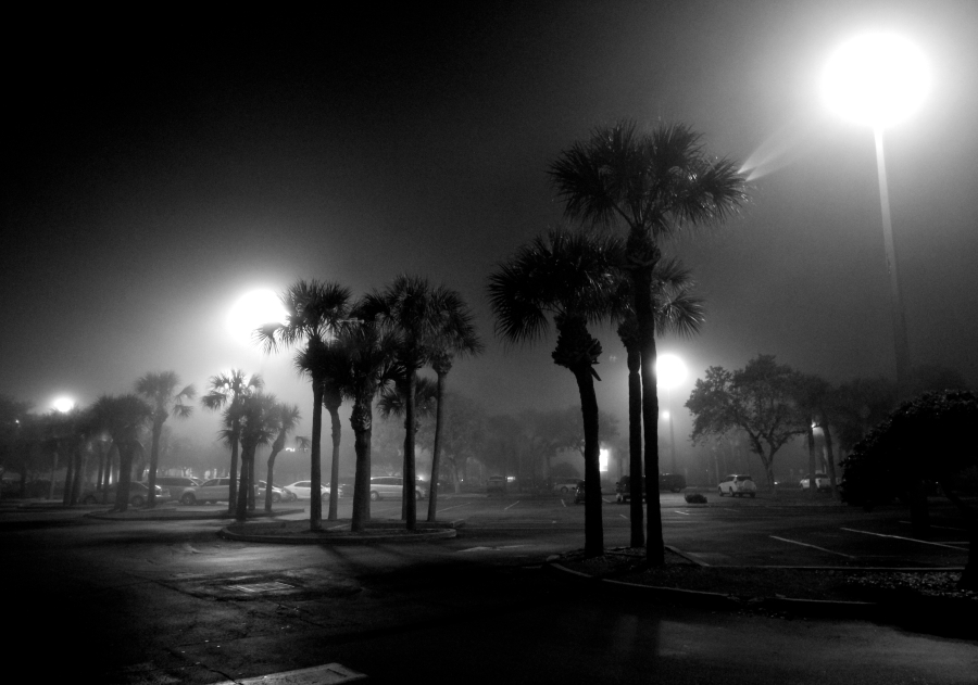 st pete beach fog palm trees