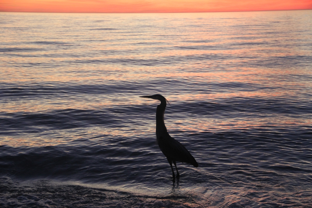 st pete's beach bird sunset 2