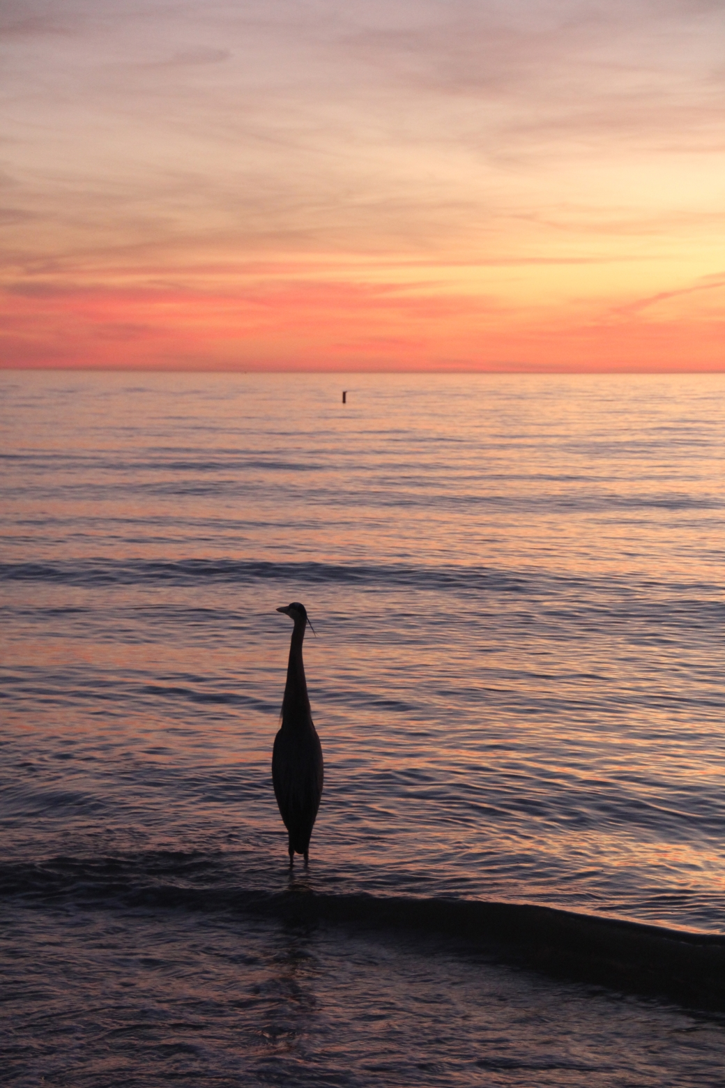 st pete's beach bird sunset