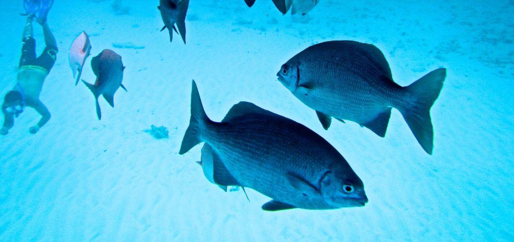 cayman islands stingray city coral reef 45