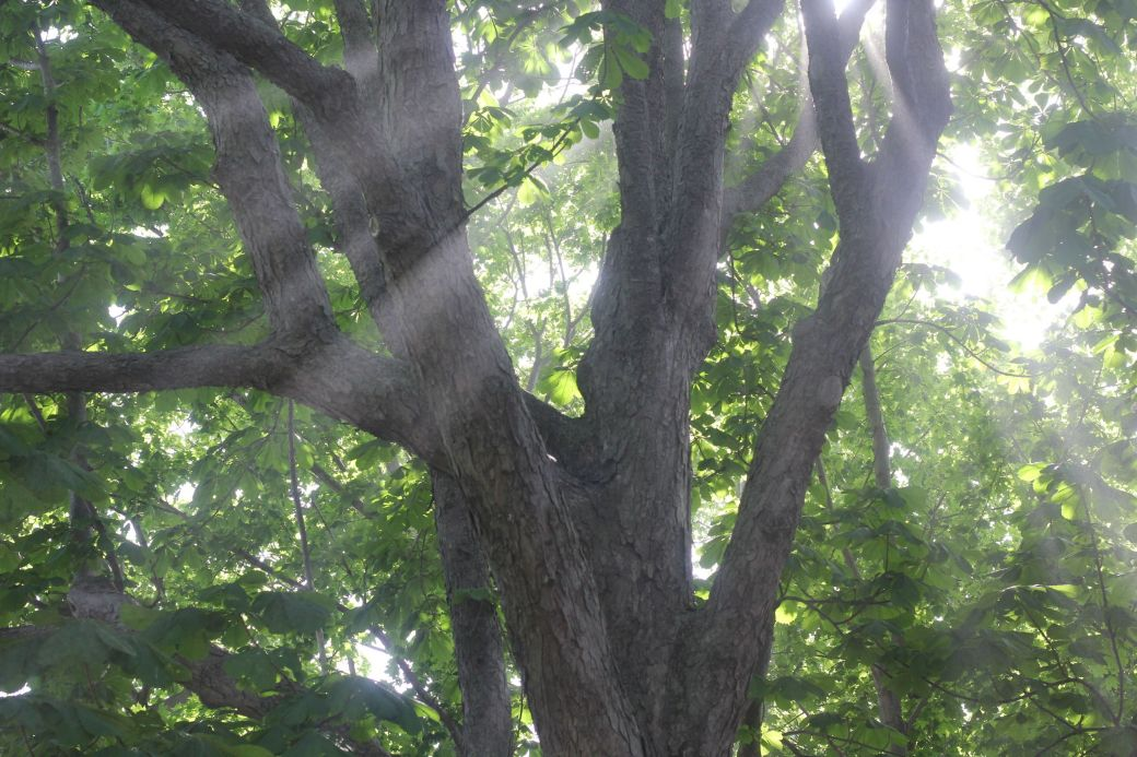 boston harbor island george's island light in tree 2
