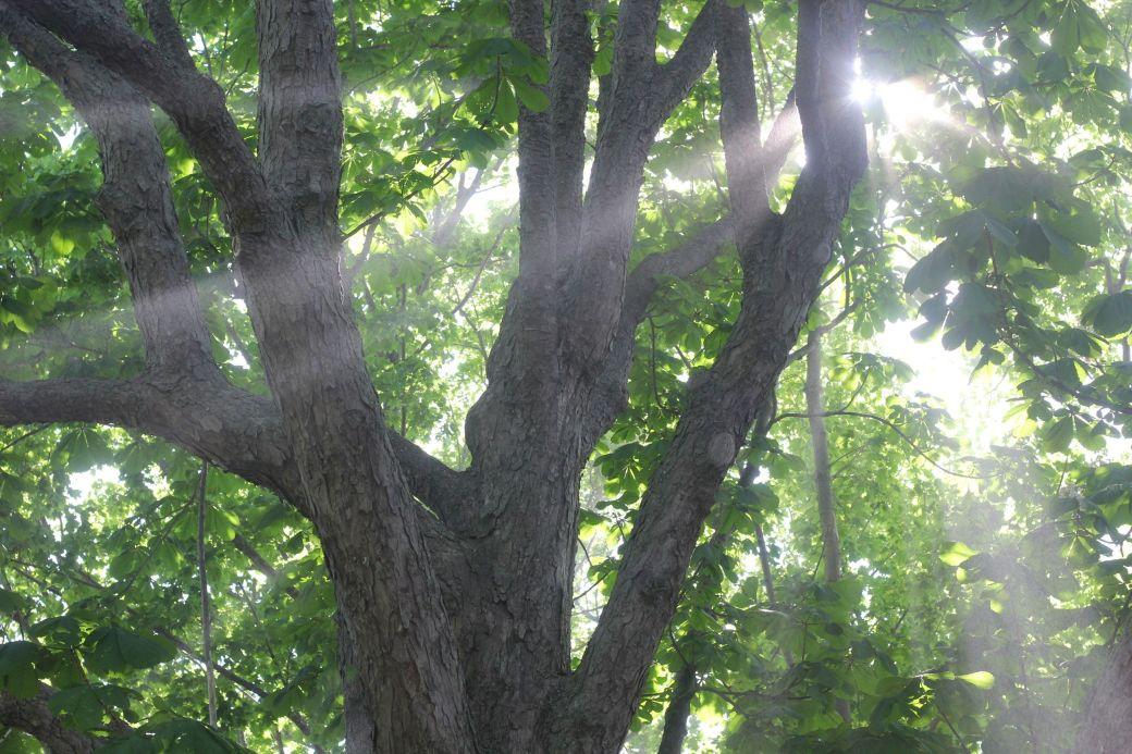 boston harbor island george's island light in tree