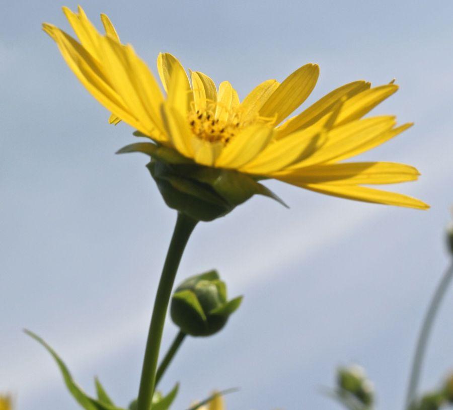 boston arnold arboretum yellow flower blue sky