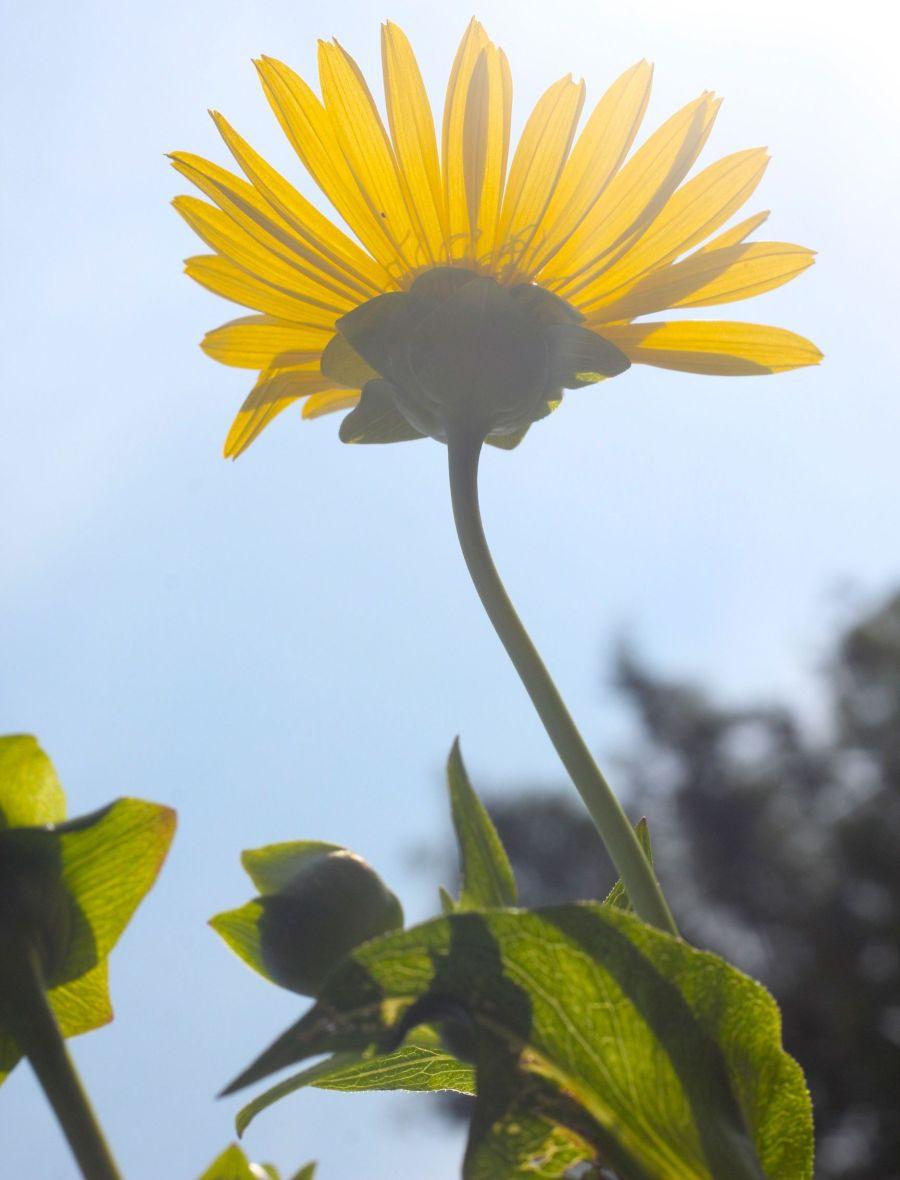 boston arnold arboretum yellow flower sunlight 3