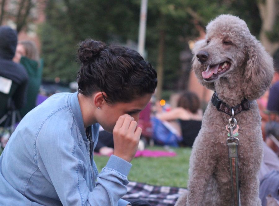 boston hatch shell night movie people person with dog 2