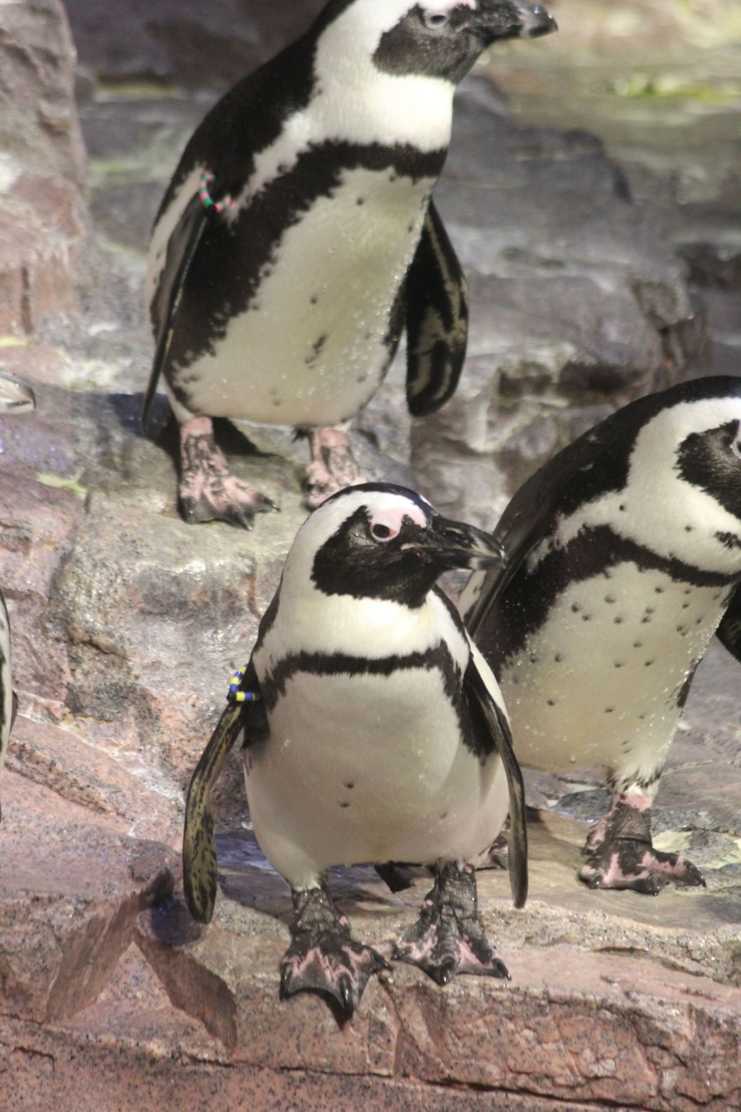 boston new england aquarium july 6 2015 penguins 2