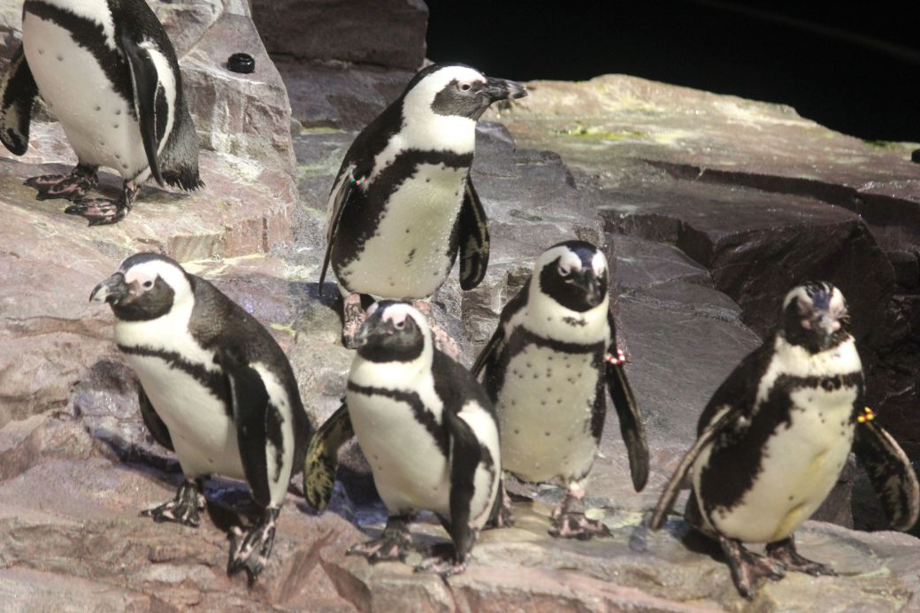 boston new england aquarium july 6 2015 penguins 3