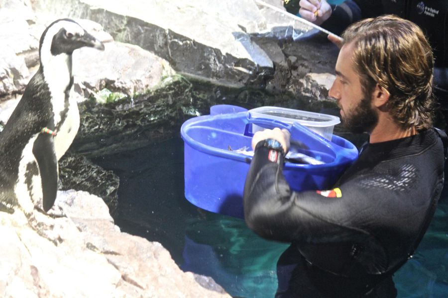 boston new england aquarium july 6 2015 penguins 4