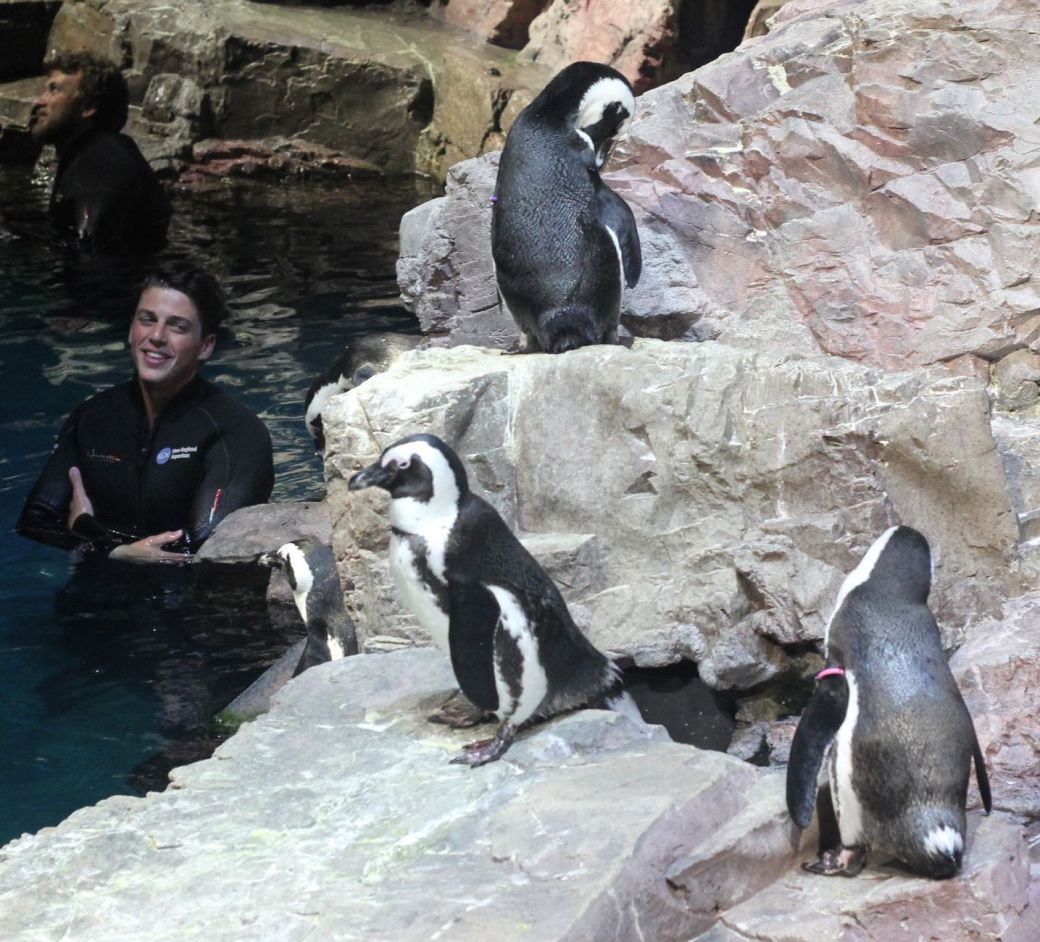 boston new england aquarium july 6 2015 penguins 5