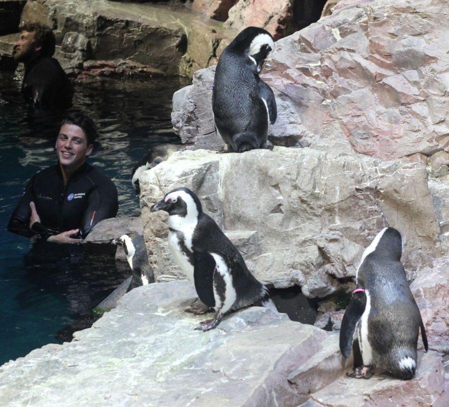boston new england aquarium july 6 2015 penguins 5