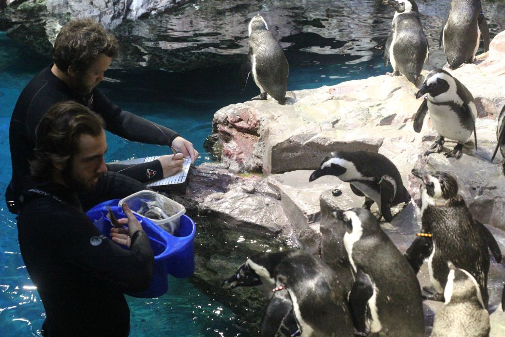 boston new england aquarium july 6 2015 penguins