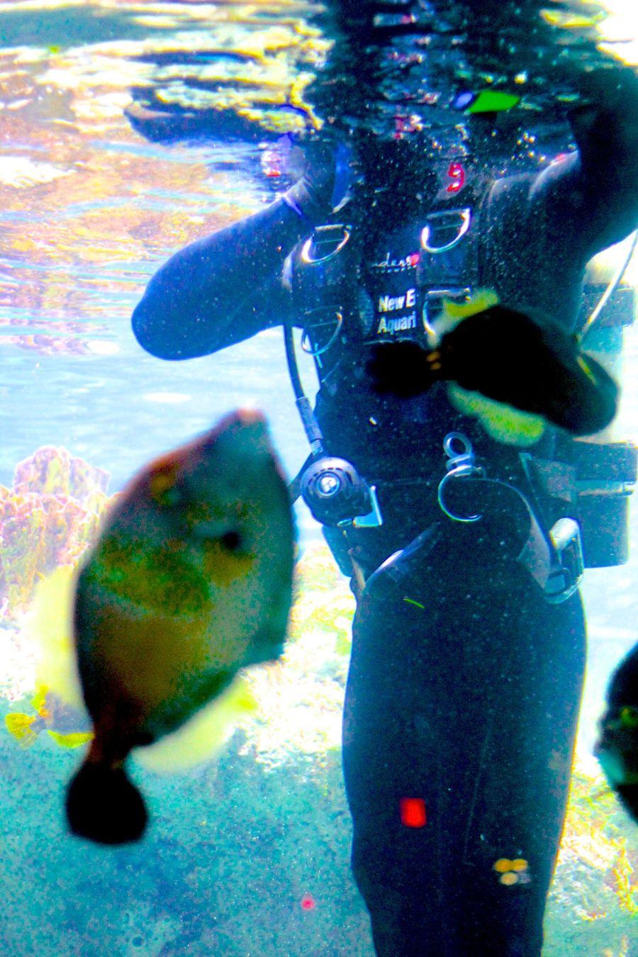 boston new england aquarium july 6 2015 scuba diver 2