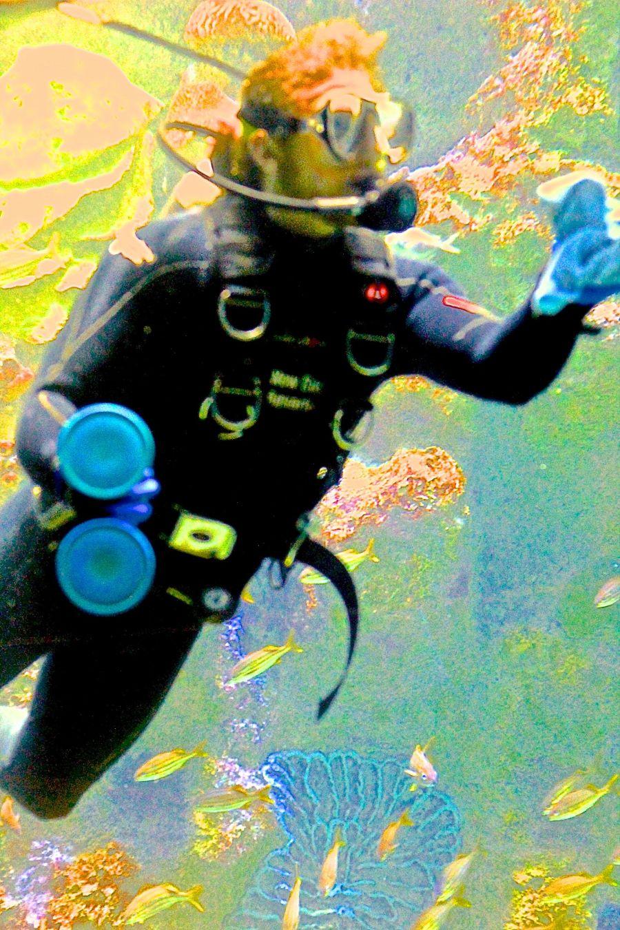 boston new england aquarium july 6 2015 scuba diver