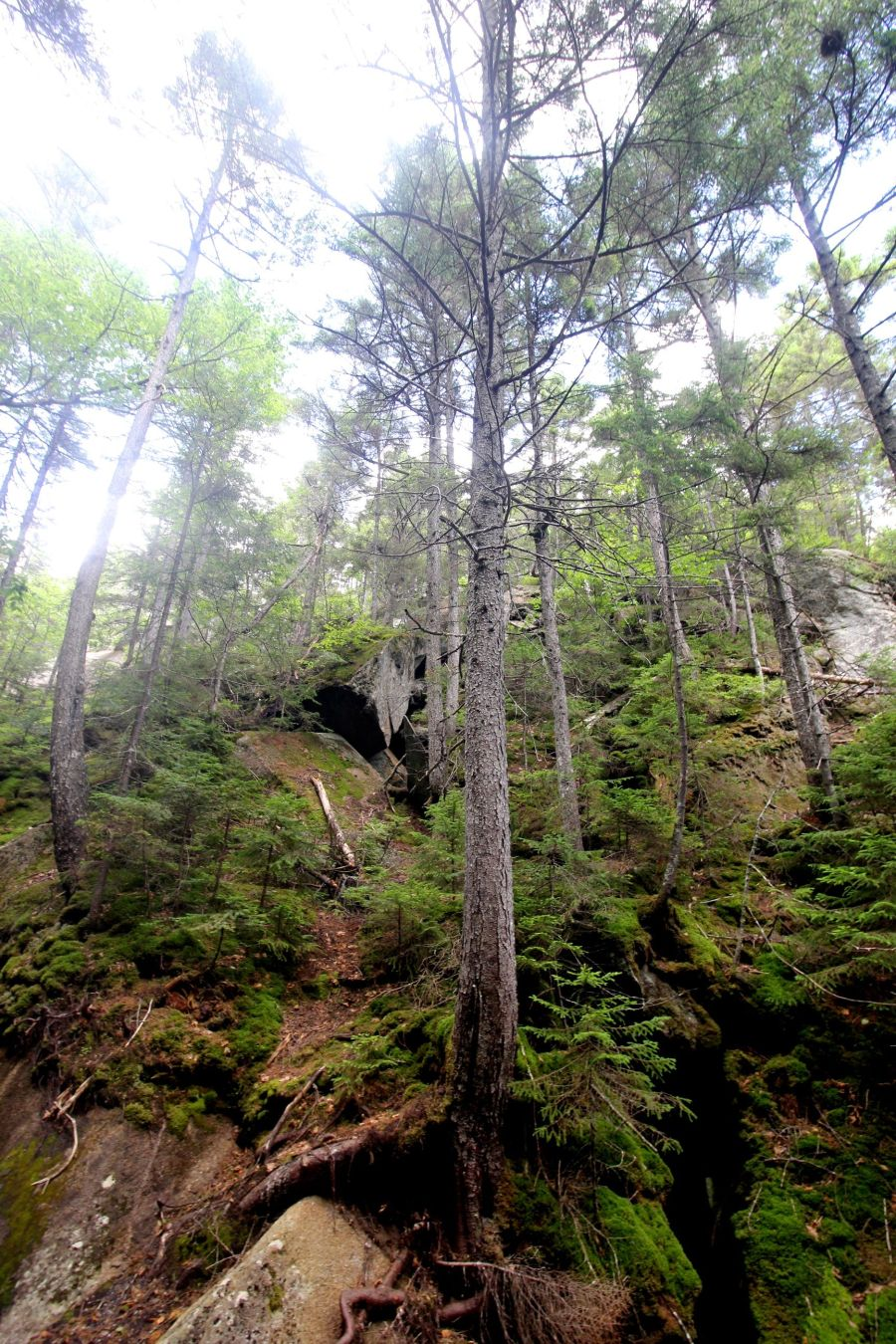 new hampshire woodstock white mountains lost river trees