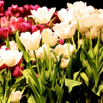 boston flower show march 20 2016 3