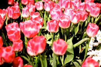 boston flower show march 20 2016 4