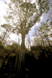 cayman island chrystal caves view 46