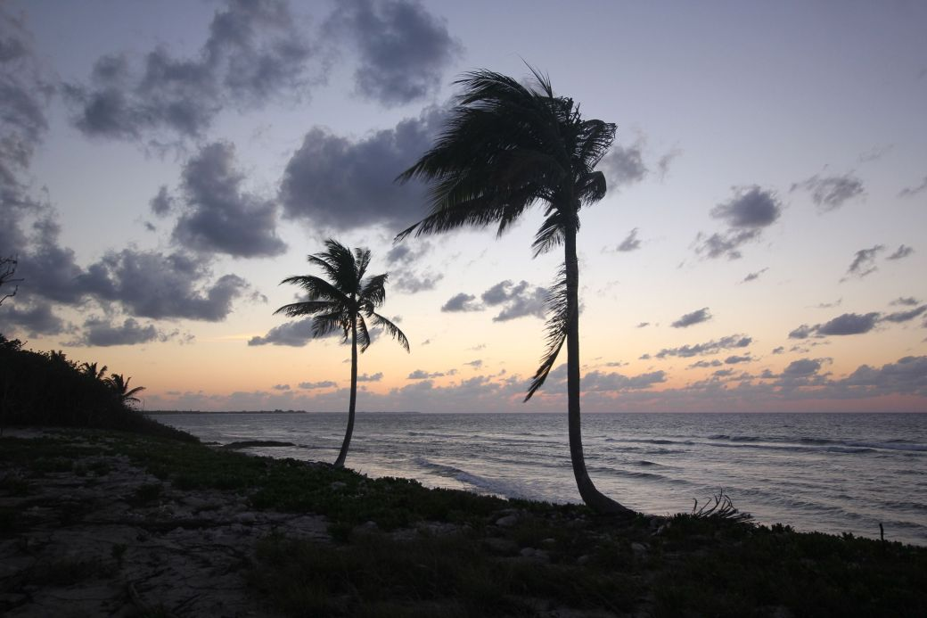 cayman islands palm trees at sunset