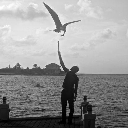 cayman islands reef resort frigate feeding 2