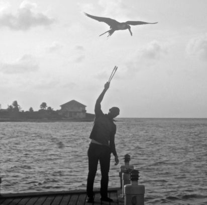 cayman islands reef resort frigate feeding 3