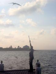 cayman islands reef resort frigate feeding 4